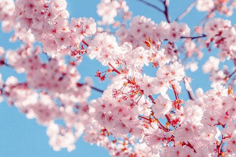 Vroegste lenteweek ooit gemeten in De Bilt - Weerplaza